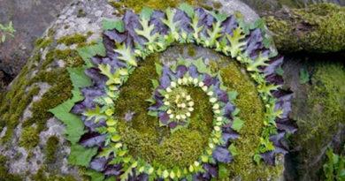Mandala de la nature